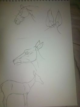 Horse/Fawn Study by Audon4150