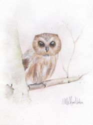 Watercolor owl by nillemarien