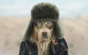 Cool Guy Dog by Surfsideaaron