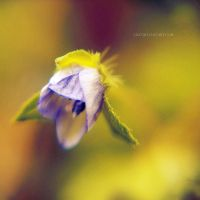.: tiny flower :. by all17