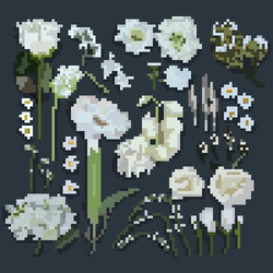 White flowers by pixelcatto