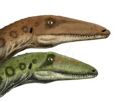 Coelophysis dimorphism by Pachyornis
