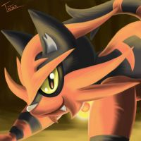 Torracat Pokemon Sun Pokemon Moon