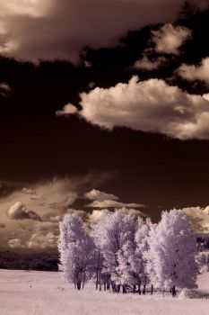 Infrared Afternoon by struggle2012