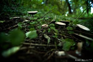 Shrooms by Capt-Ahab