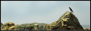 Crow on the Rock by Kirtan-3d