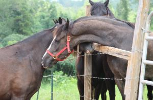 Multiple Horses 34 by MountainViewStock