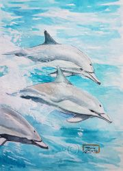 World Watercolor Month - Day 9 (Dolphins) by Harmony1965