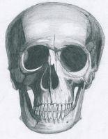 Skull drawing by Bl1ghtmare