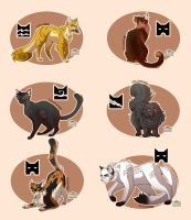 Warrior Cats - personal designs - #4 by Sunnyluchs