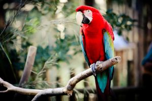 Scarlet Parrot by ahley
