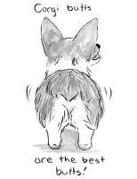 Corgi Butt by lunavalse