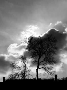 Tree on roof by frank74it