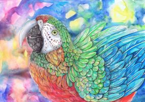 Rainbow Parrot by dawndelver