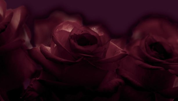 Dark Roses by Hope2Fly