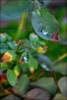 glass drops by asainemuri