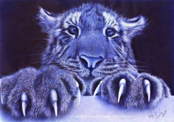 Tiger blue pen drawing by 22Zitty22