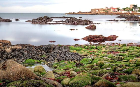 Colors of the Low Tide by inkedpt