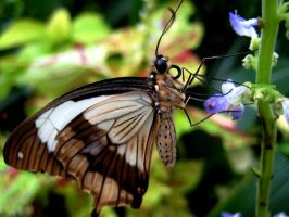 Butterfly 1 by Iris-cup