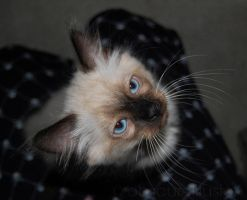 meet Mister Whiskers by obscureillusion