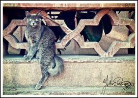 living on the edge by Yehiazz