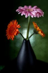 Gerberas and vase by ninereeds-DA