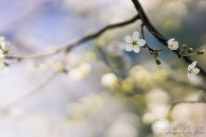 Pale shades of spring by FeliDae84