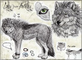 Cally Arctilly-Ref Sheet by Cally-Dream