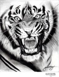tiger drawing by Johnny-Designer