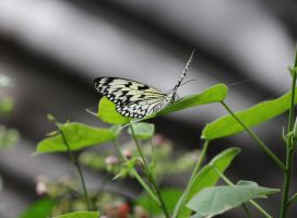Butterfly 6 by Nolamom3507