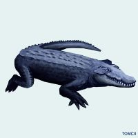 Crocodile by Tom-Cii
