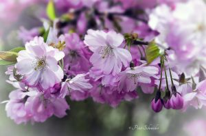 Spring tales. by Phototubby