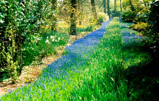 Blue Bell Path by UbiquitousJamie