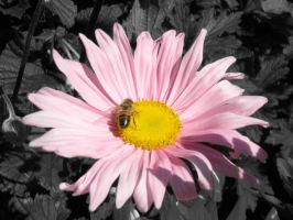 Pollinating the Colour by lozzy1992