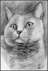 Silvery Cat by philippeL