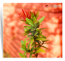 Red Green Flower by carnine9