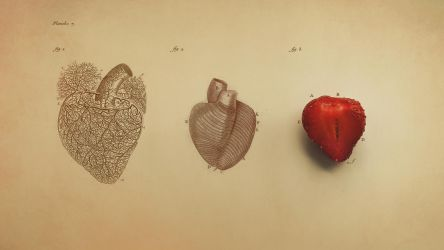 Anatomy of Heart by Niux