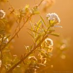 Soft morning light by isotophoto