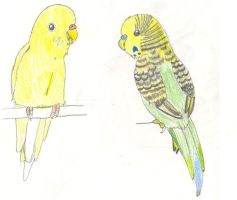 Purty Birdies Colored Pencil by dawny