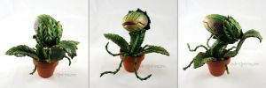 Little Shop of Horrors DONE by SpankTB