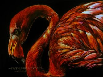Flamingo by AmBr0