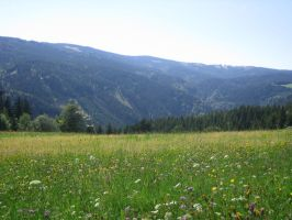 meadow by Hrivalasse-stock
