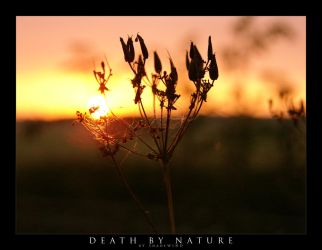Death By Nature by shadewind