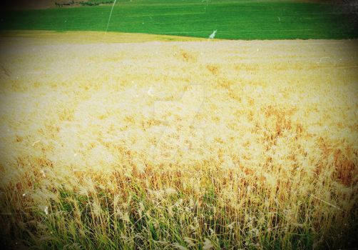 Countryside 3 Wheat Crop by ioncik