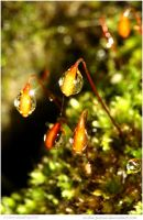 Raindrops 26 of 365 by In-the-picture