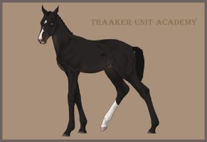 Traaker Import 42 | CLOSED by Pashiino