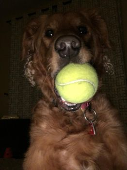 Tennis Ball in the Dark 2 by No1much