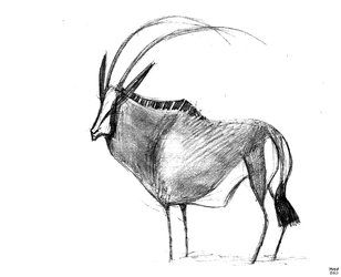 Sable Bull Sketch by sketchinthoughts