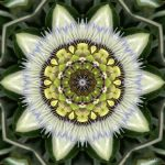 Passiflora by MarvickSands