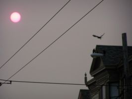 Red Sun with Crow by misterunlucky